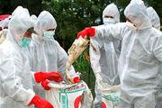 شیوع آنفلوانزای پرندگان در قزاقستان