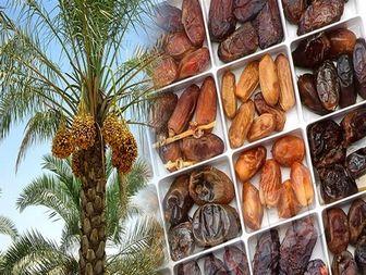 دسترنج کشاورزان خوزستانی در جیب خارجیها میرود+تصاویر