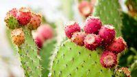 نکتههایی برای نگهداری گیاهان در فصل پاییز و زمستان