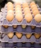قیمت هر شانه تخممرغ ۵۰۰۰ تومان!