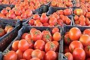 برخورد جدی تعزیرات با گرانفروشان گوجه فرنگی