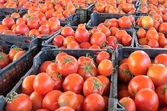کاهش قیمت گوجه فرنگی در راه است
