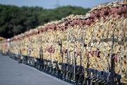 آخرین اخبار معافیت سربازی