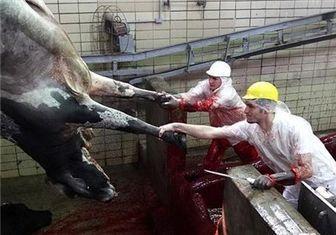 میزان مصرف گوشت قرمز هر ایرانی
