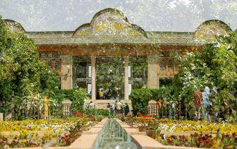 رایحه دلنشین بهارنارنج در باغهای شیراز /گزارش تصویری