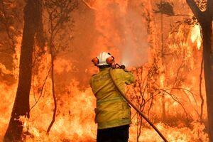 آتش، یک پنجم از جنگلهای استرالیا را سوزاند